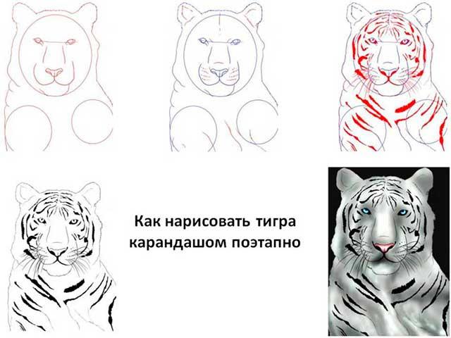 морда тигра